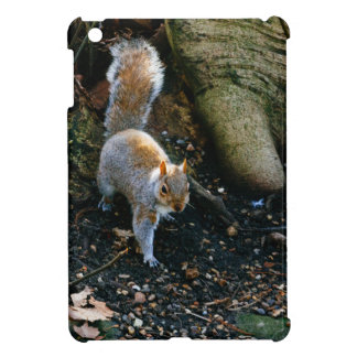 Cute Squirrel Photograph, Animal In Forest Cover For The iPad Mini