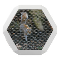 Cute Squirrel Photograph, Animal In Forest White Bluetooth Speaker