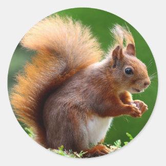 Cute Squirrel Picture Classic Round Sticker