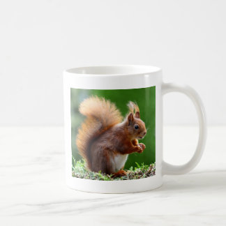 Cute Squirrel Picture Coffee Mug