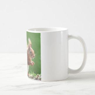 Cute Squirrel Picture Coffee Mug