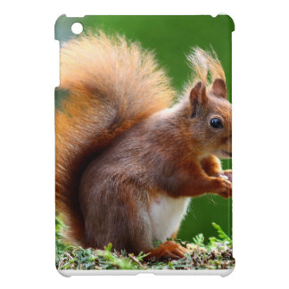 Cute Squirrel Picture iPad Mini Cover