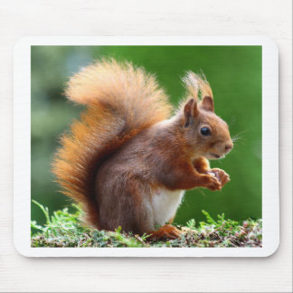 Cute Squirrel Picture Mouse Pad