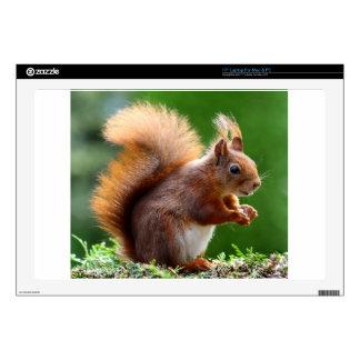 "Cute Squirrel Picture 17"" Laptop Skins"