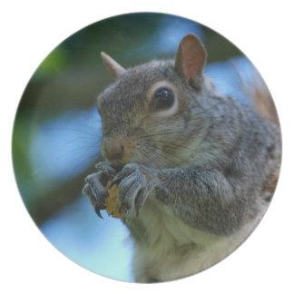 Cute Squirrel Plate