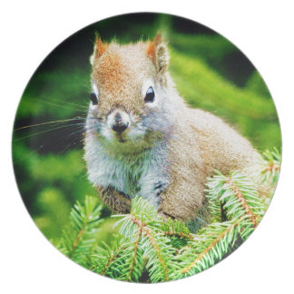 Cute Squirrel Party Plate