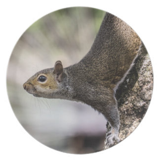Cute Squirrel Party Plates