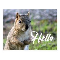 cute squirrel post card- hello/hi/greeting postcard