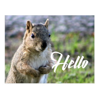 cute squirrel post card- hello/hi/greeting postcard