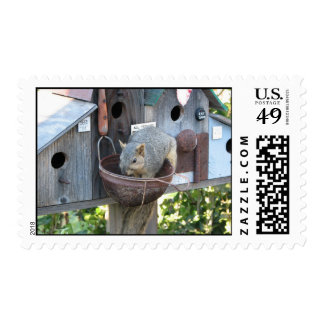 Cute Squirrel Postage Stamps