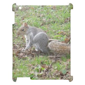 Cute Squirrel Scratching iPad Case