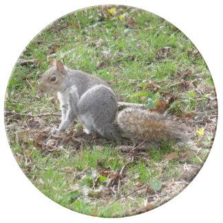 Cute Squirrel Scratching Porcelain Plates