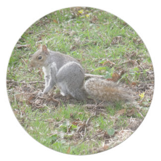 Cute Squirrel Scratching Party Plate