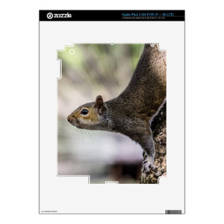 Cute Squirrel Skins For iPad 3