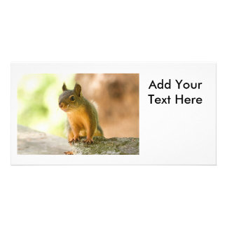 Cute Squirrel Smiling Card