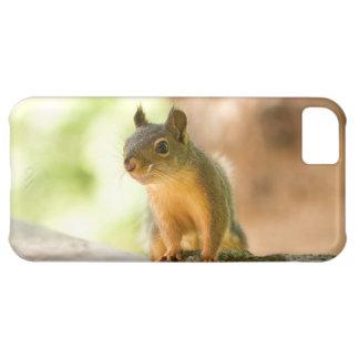 Cute Squirrel Smiling Case For iPhone 5C