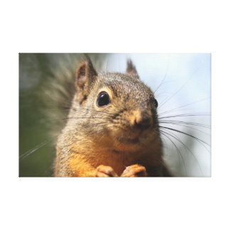 Cute Squirrel Smiling Closeup Photo Stretched Canvas Print