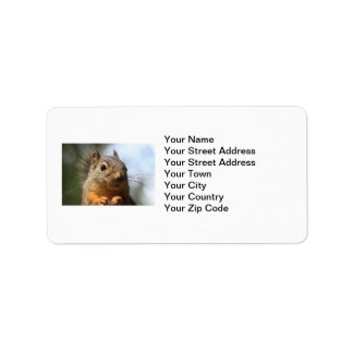 Cute Squirrel Smiling Closeup Photo Label