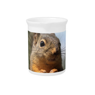 Cute Squirrel Smiling Closeup Photo Drink Pitcher