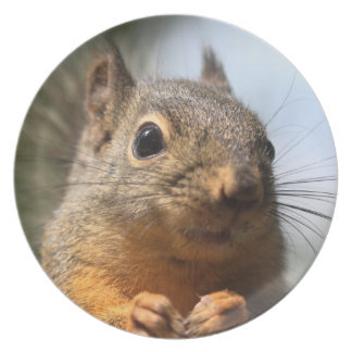 Cute Squirrel Smiling Closeup Photo Party Plates