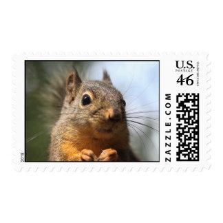 Cute Squirrel Smiling Closeup Photo Stamp