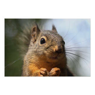 Cute Squirrel Smiling Closeup Photo Poster