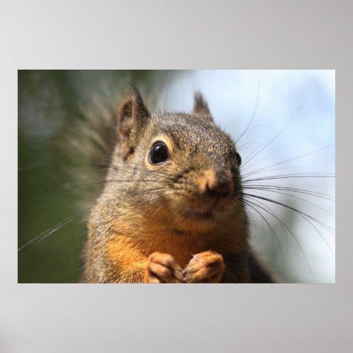 Cute Squirrel Smiling Closeup Photo Poster