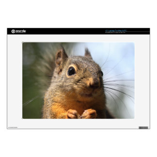 Cute Squirrel Smiling Closeup Photo Decals For Laptops