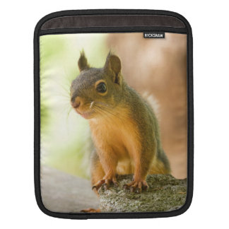 Cute Squirrel Smiling Sleeves For iPads