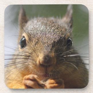 Cute Squirrel Smiling Macro Photo Beverage Coasters