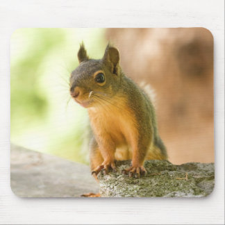 Cute Squirrel Smiling Mouse Pad