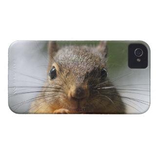 Cute Squirrel Smiling Photo Case-Mate iPhone 4 Case