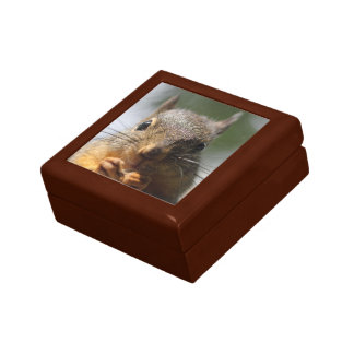 Cute Squirrel Smiling Photo Gift Box
