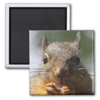 Cute Squirrel Smiling Photo Fridge Magnets