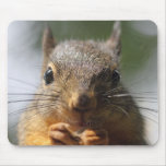 Cute Squirrel Smiling Photo Mouse Pad