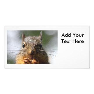 Cute Squirrel Smiling Photo Photo Card Template