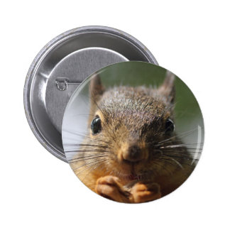Cute Squirrel Smiling Photo Pinback Button