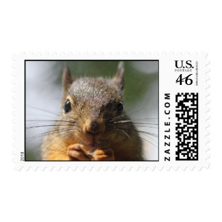 Cute Squirrel Smiling Photo Postage Stamps