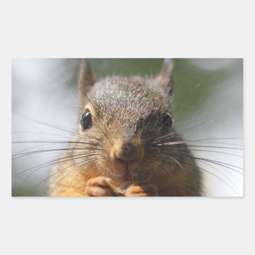 Cute Squirrel Smiling Photo Rectangular Sticker