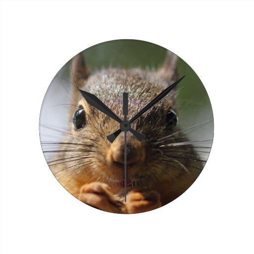 Cute Squirrel Smiling Photo Round Wall Clocks