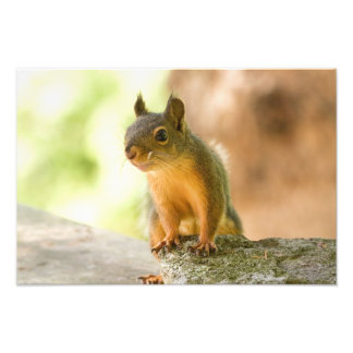 Cute Squirrel Smiling Photographic Print