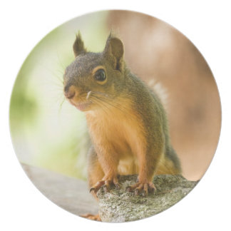 Cute Squirrel Smiling Party Plates