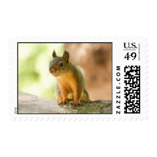 Cute Squirrel Smiling Postage