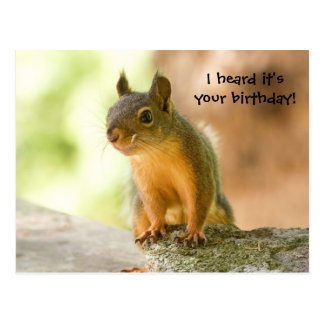 Cute Squirrel Smiling Postcard