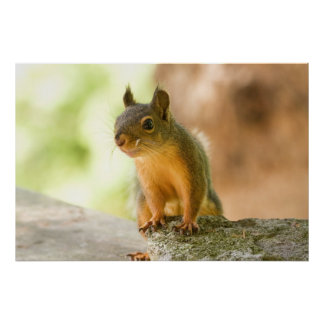 Cute Squirrel Smiling Poster