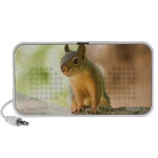 Cute Squirrel Smiling Travelling Speaker