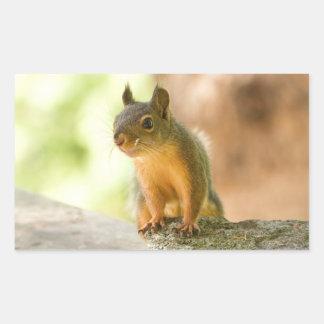 Cute Squirrel Smiling Rectangular Stickers