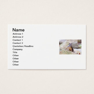 Cute Squirrel Staring Business Card