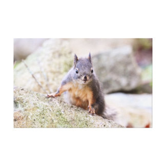 Cute Squirrel Staring Gallery Wrapped Canvas