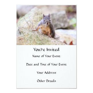Cute Squirrel Staring Card